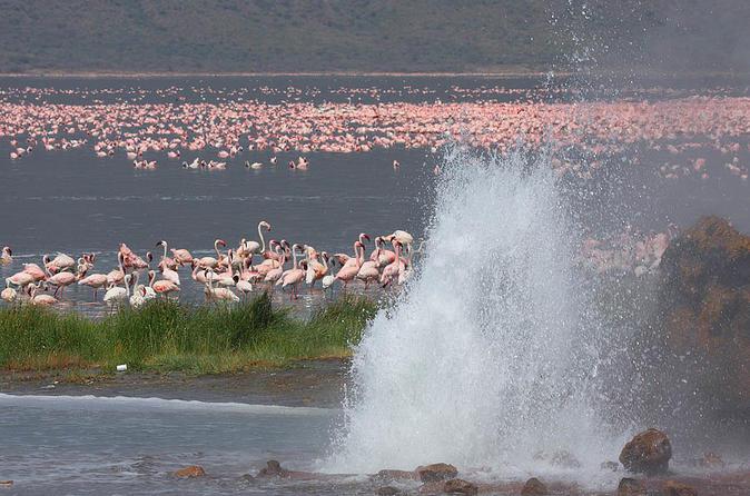 2days Guided Flamingo Tours To Lake Bogoria & Lake Nakuru From Nairobi