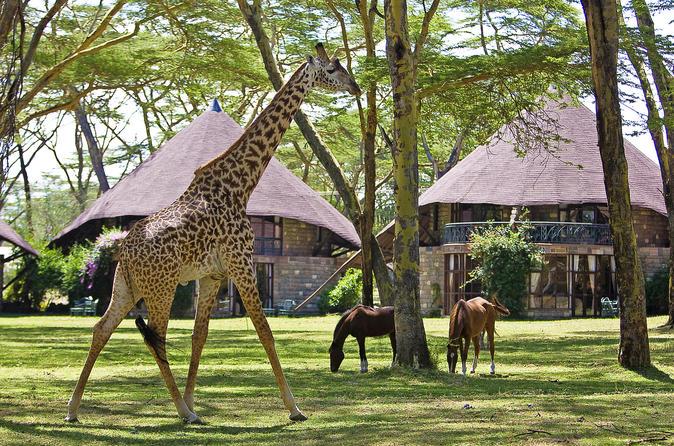 4-Day Lake Naivasha & Masai Mara Private Luxury Safari