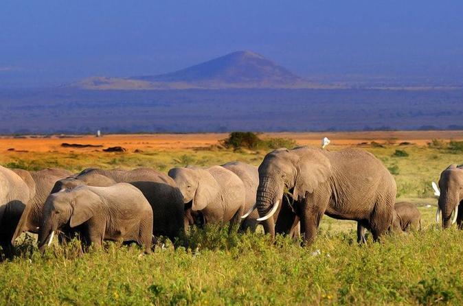 5day: Best of Kenya Big 5 Wildlife Safari to Amboseli & Tsavo West National Park