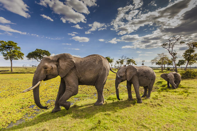 5days: Hell's Gate, Lake Naivasha, Lake Nakuru & Masai Mara Camping Safari