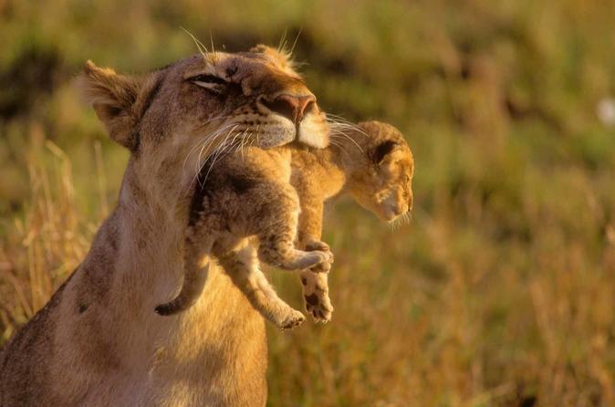 5Days Masai Mara Budget Tented Camping Safari