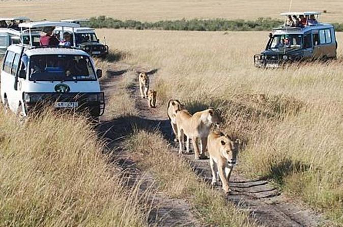 6Days Tanzania Tented Camping Safari Serengeti Manyara Ngorongoro Tarangire Park