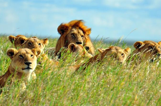 7days Breathtaking Kenya Safari