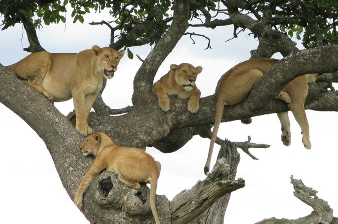 7Days Tanzania Lodge Safari Lake Manyara  Serengeti Ngorongoro Tarangire Safaris