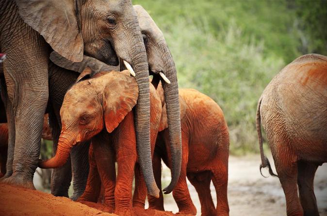 8Days Best of Kenya Wildlife Safari