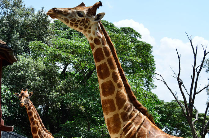 Giraffe Center Half-Day Trip from Nairobi