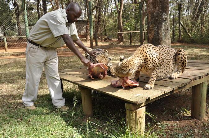 Nairobi Day Tour Animal Orphanage, Safari Walk & Bomas of Kenya