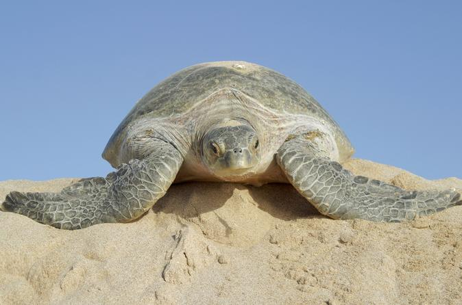 2 Days Muscat Watching Turtles and Wadi Shab Package