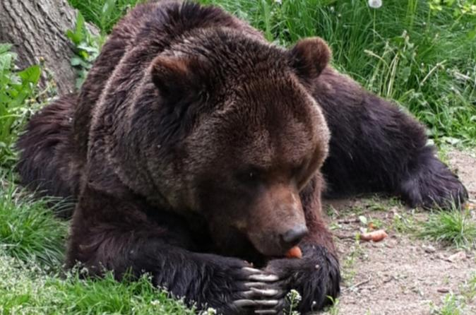 Day Tour From Brasov To The Bears Sanctuary, Rasnov Fortress And Bran Castle