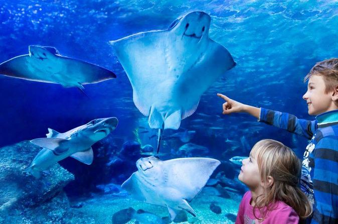 Skip The Line: Sea Life Admission Ticket - Berlin
