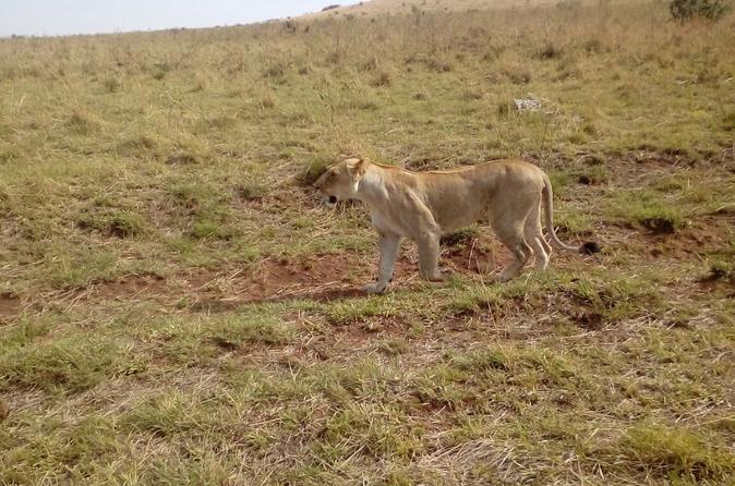 3 Days Mara Experience Safari