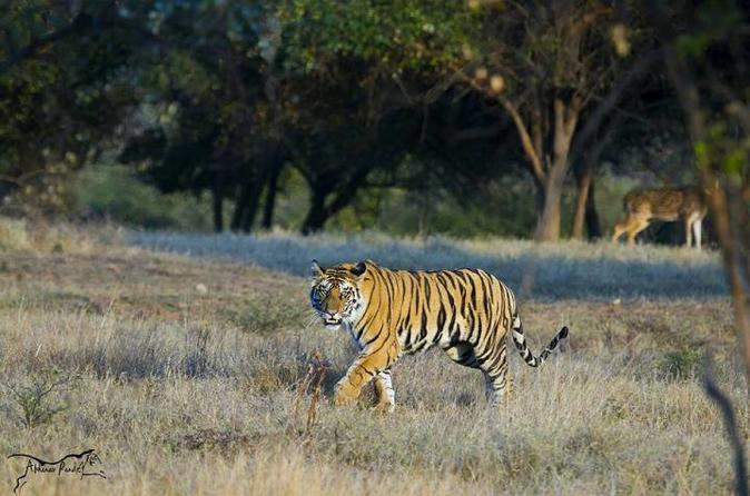 Wildlife Adventures With Glimpse Of Tajmahal And Rajasthan - Delhi