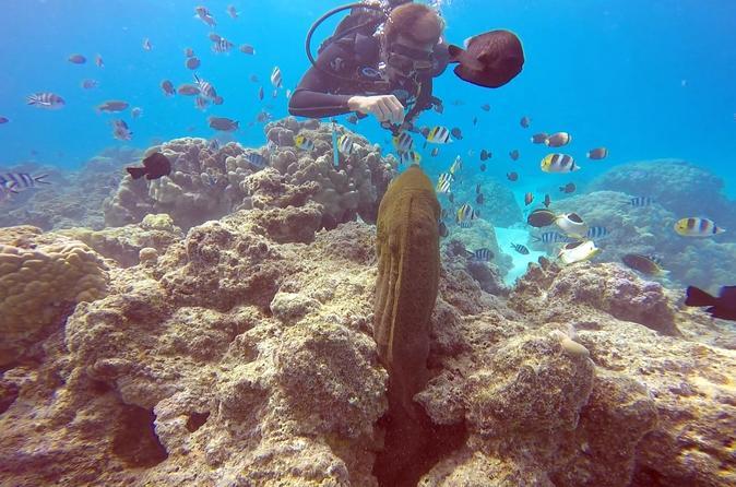 Bora Bora Scuba Diving: Private Intro Or Certified One Tank Dive