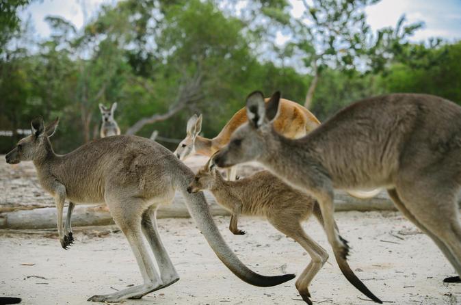Australia Walkabout Wildlife Park General Admission: Family 1 Adult Plus Children