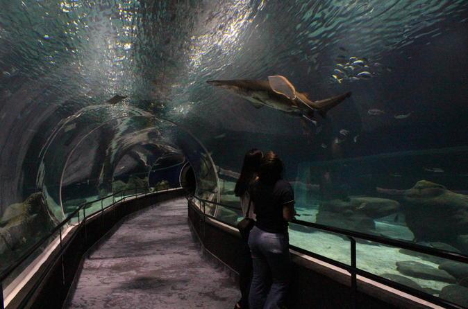 Ingresso de entrada antecipada ao Aquário AquaRio