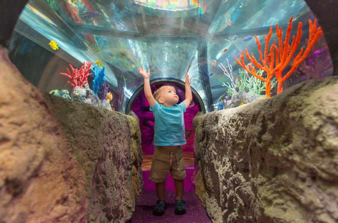 Ingressos para 3 atrações: Icon Orlando, Madame Tussauds Orlando e SEA LIFE Aquarium