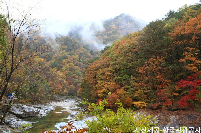 Nami Island & Mount Seorak Day Trip From Seoul