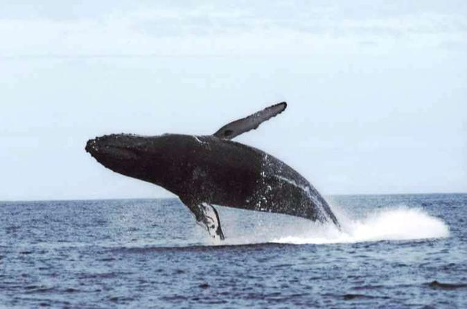 San Diego Private Whale Watching Tour