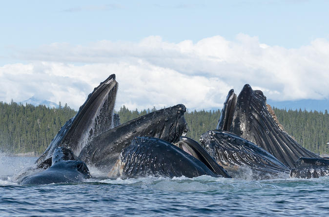 Paddle with Whales! Private Boat Charter