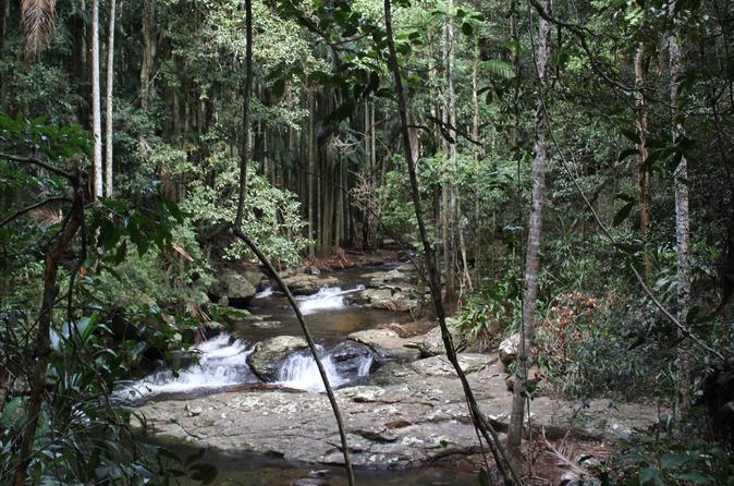 Gold Coast Mountains Tour Including Springbrook National Park and Mt Tamborine