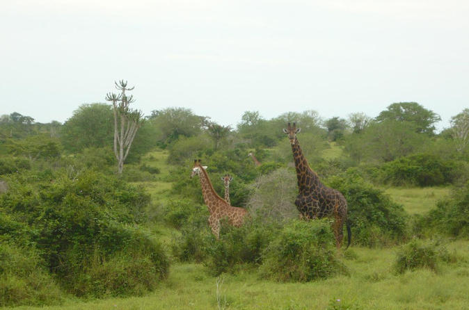 Kissama National Park Overnight Tour from Luanda: 2 days 1 night