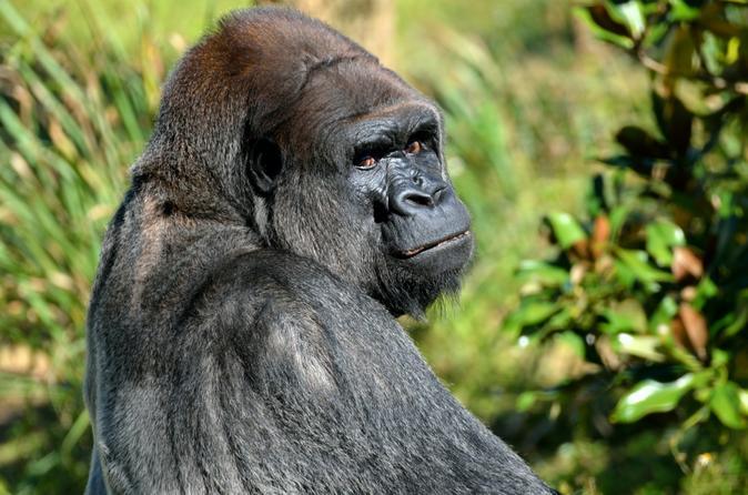 Lesio Louna Natural Reserve Gorillas - Bela Falls - 5 Day Tour From Brazzaville