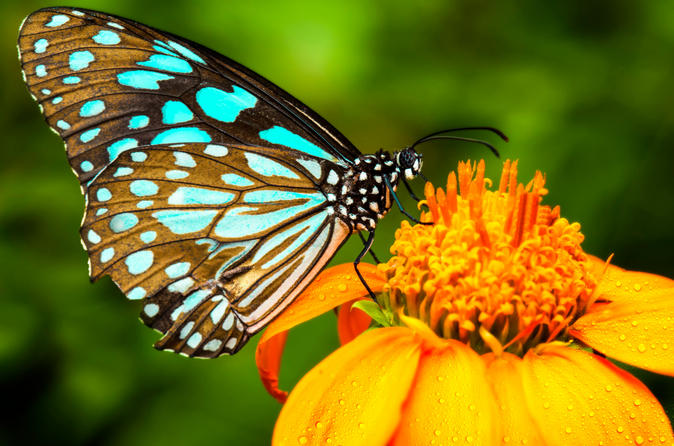 Butterfly Conservatory Admission