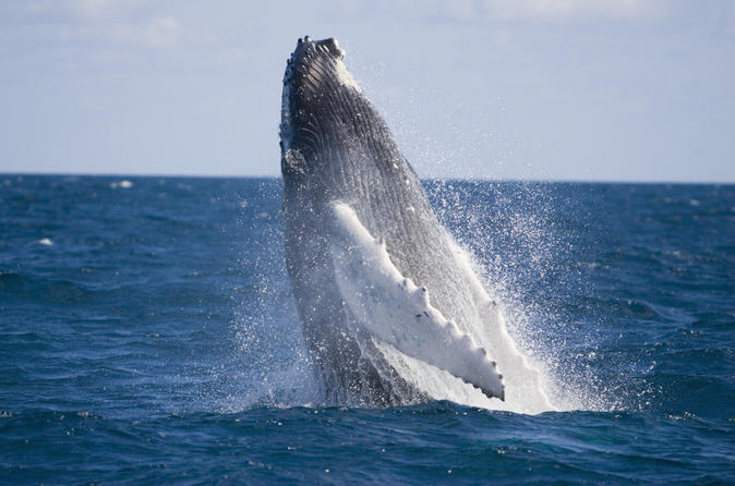 Half day whale watching and canal cruise from the gold coast in gold coast 164070