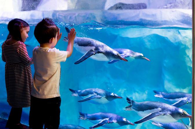 Evite as filas: Sea Life Aquarium de Londres