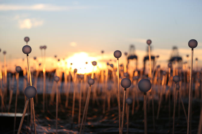 Albany Field of Light Sunset Panorama