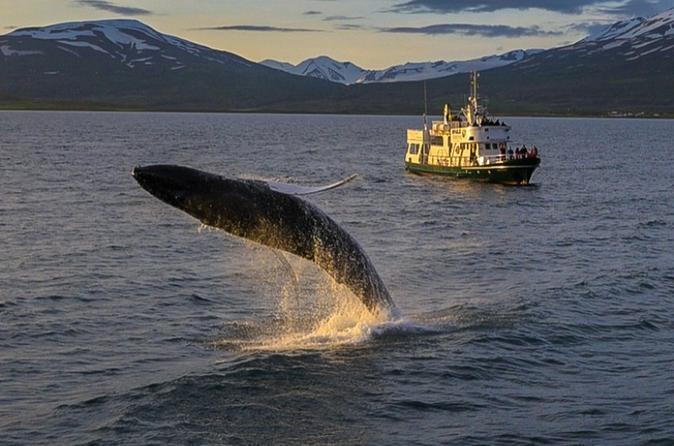 Akureyri Cruises, Sailing & Water Tours