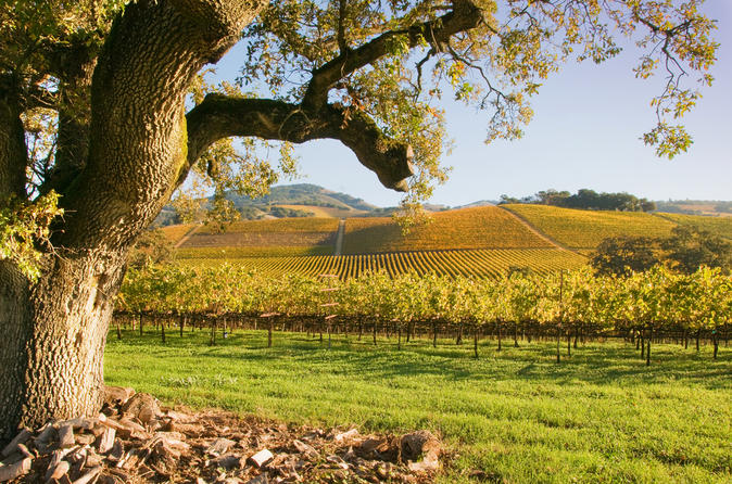Small group napa and sonoma wine country tour with lunch in san francisco 126755