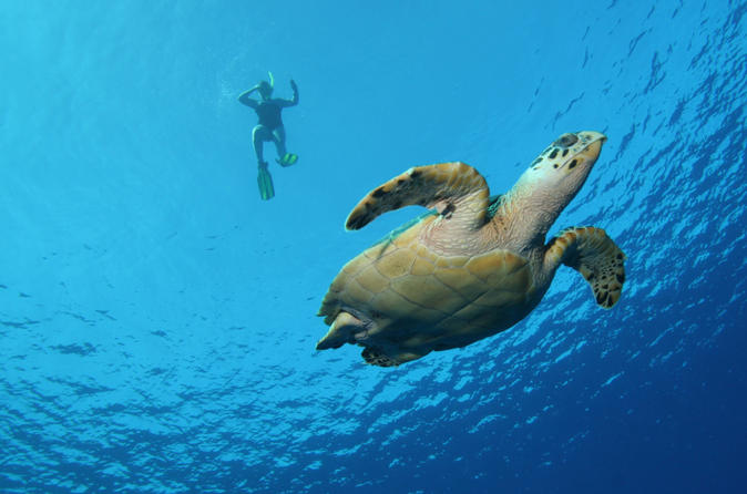 Big island snorkel cruise along kohala coast in hawaii 112459