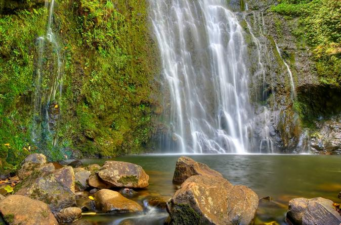East maui waterfalls and rainforest hike in maui 147014