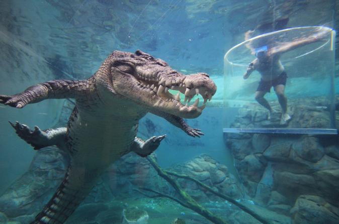 31bcb7896d2 Cage of Death at Darwin's Crocosaurus Cove in Australia Pacific ...