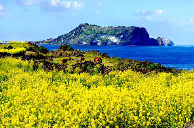 All inclusive small group full day tour of jeju island in jeju si 463533