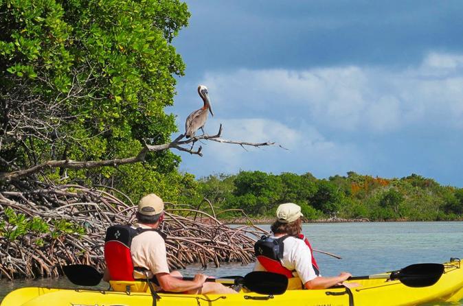 St Thomas Kayak Tour: Sunset Birding at Mangrove Lagoon
