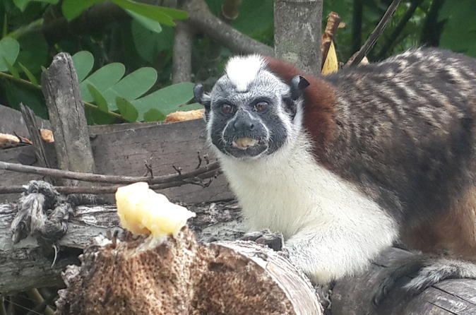 Soberania national park monkey island and indian village from panama in panama 235848
