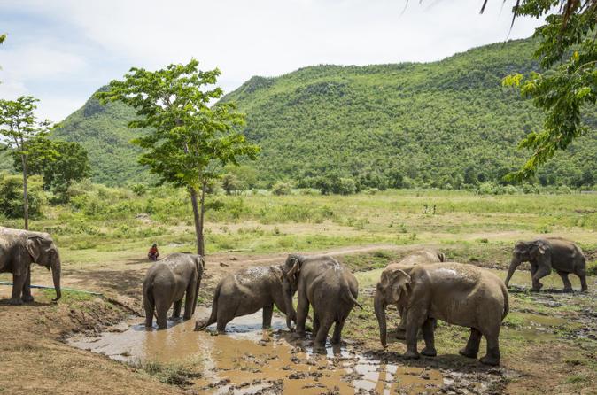 Elephant World Kanchanaburi with private transfer from Bangkok