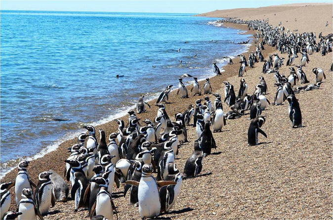 Day trip to punta tombo in puerto madryn 249144