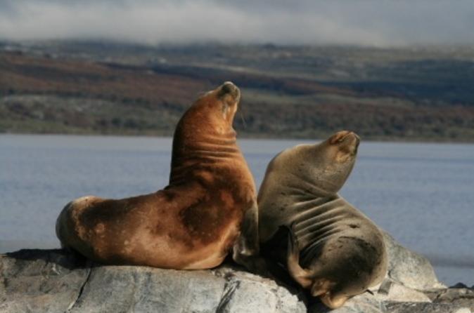 Estreito de Beagle e excursão de catamarã pela Ilha Seal partindo de Ushuaia