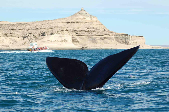 Peninsula valdes national park day trip in puerto madryn 249136