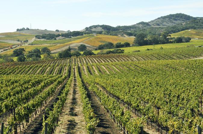 Casablanca Valley Private Wine Tour: Casas del Bosque and Emiliana Wineries