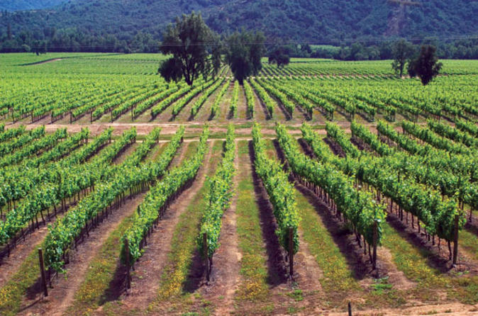 Maipo Valley Wine Tour: Santa Rita and Concha y Toro Wineries