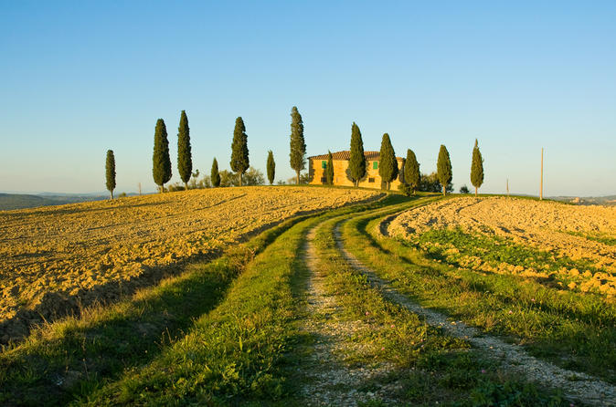 Livorno Shore Excursion: Chianti and Tuscany Countryside Private Wine Tour