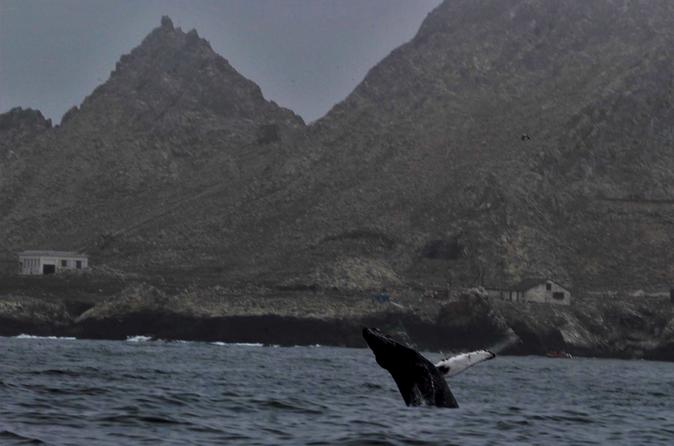 Full-Day Farallon Islands Whale Watching Excursion