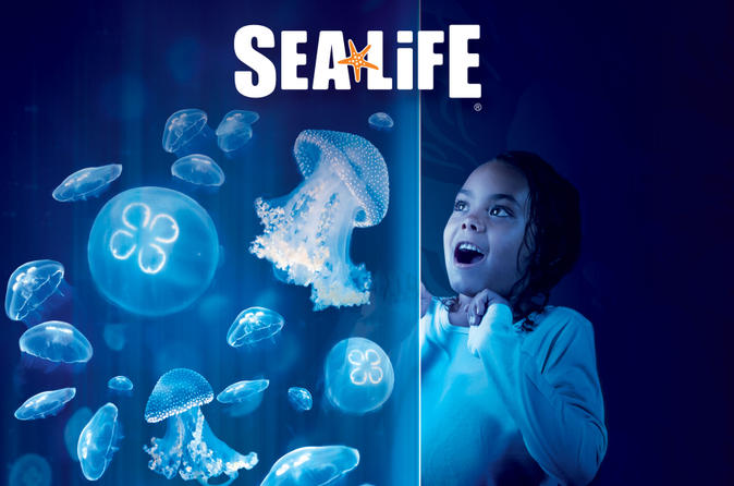 Sea Life Orlando Aquarium 2017 Orlando