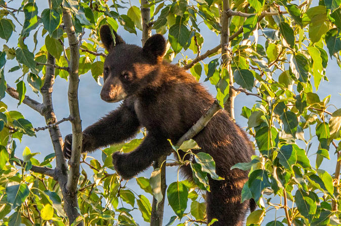 Jasper evening wildlife tour in jasper 433148