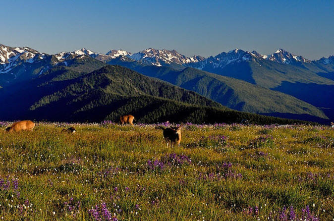 Olympic National Park Small-Group Tour from Seattle
