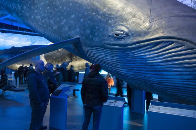 Whale Day of Fun: Land & Sea
